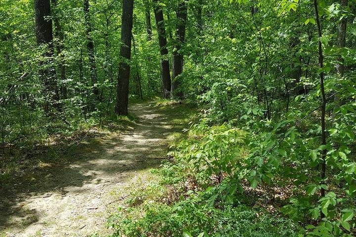 Pet Friendly Bald Mountain Recreation Area