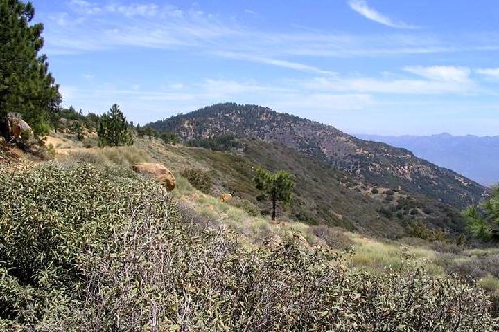 Pet Friendly Reyes Peak Trail