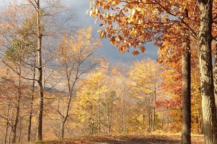 Pet Friendly Rockefeller Preserve Trail