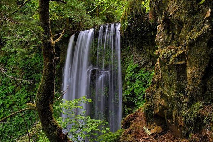 Pet Friendly Larch Mountain to Multnomah Falls Trail