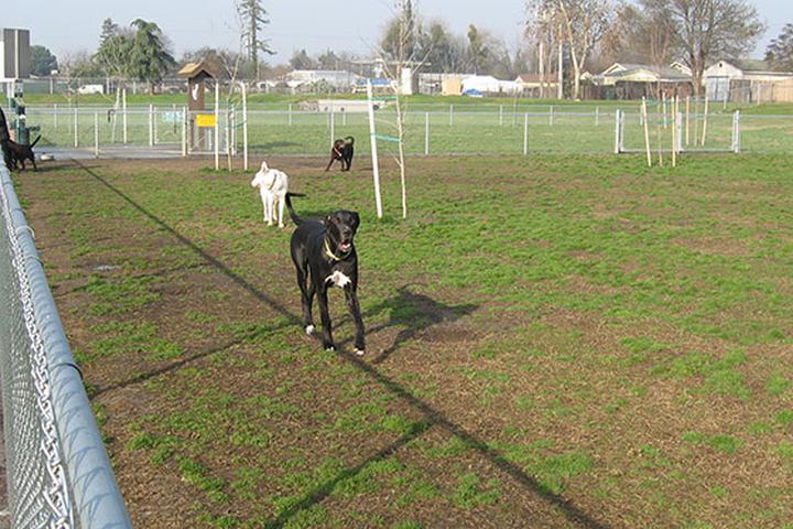 Pet Friendly Sunnyview Dog Park