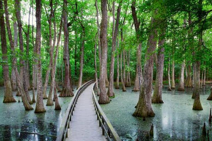Pet Friendly Cypress Swamp Trail