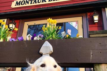 Pet Friendly Montauk Brewing Company