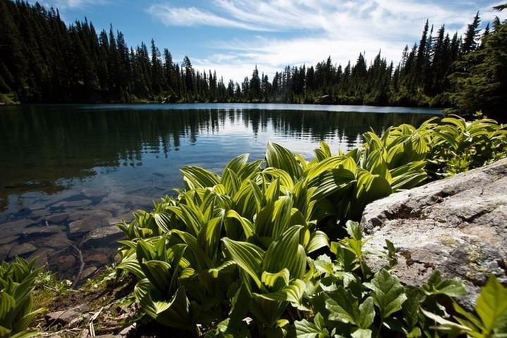 Pet Friendly Margaret Lake / Lake Lillian