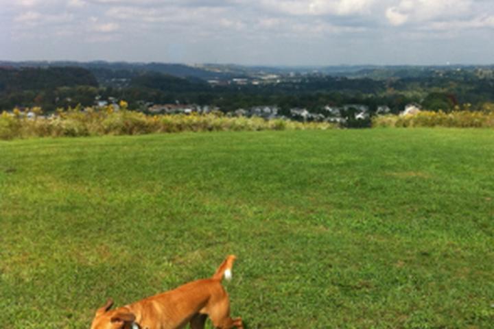 Pet Friendly Fairview Dog Park