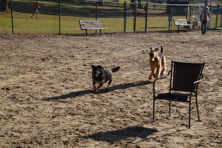 Pet Friendly Down East Dog Park