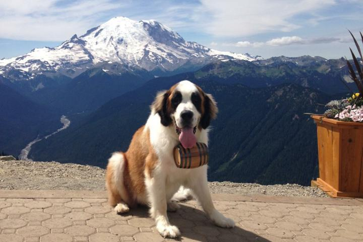Pet Friendly Mt. Rainier Gondola