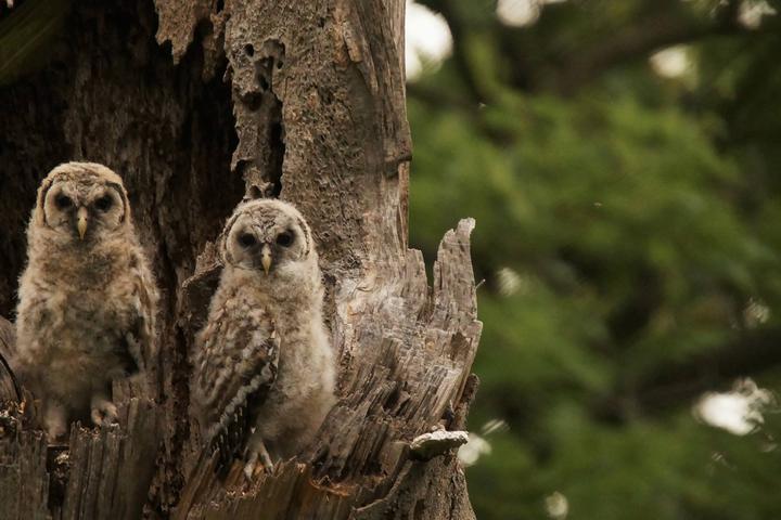 Pet Friendly Natural Lands Trust's Saunders Woods Preserve