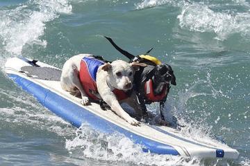 Pet Friendly Huntington State Beach