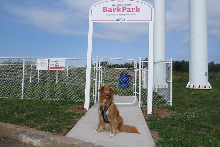 Pet Friendly Irving Big Stop Bark Park