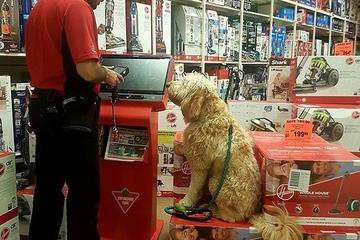 Pet Friendly Canadian Tire