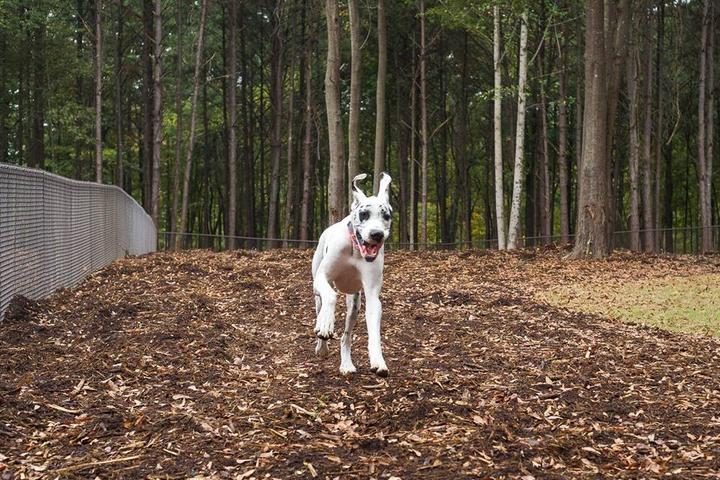 Pet Friendly Jasper's Dog Park at Eagles Point Park