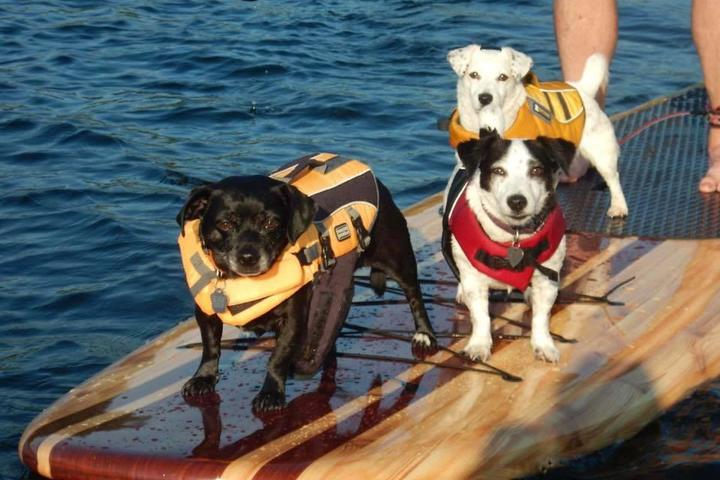 Pet Friendly Three Brothers Boards