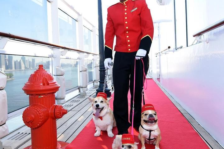 Pet Friendly Queen Mary II