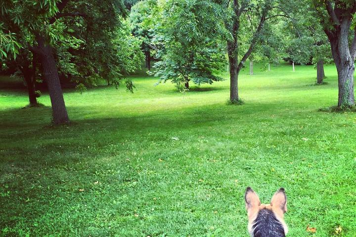 Pet Friendly Lyndale Park Rose Garden