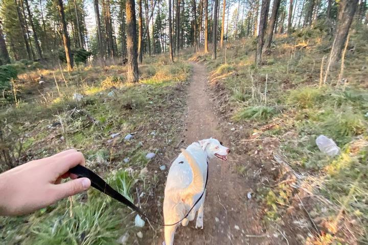 Pet Friendly The Whitefish Trail