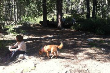 Pet Friendly Dry Lake Trail