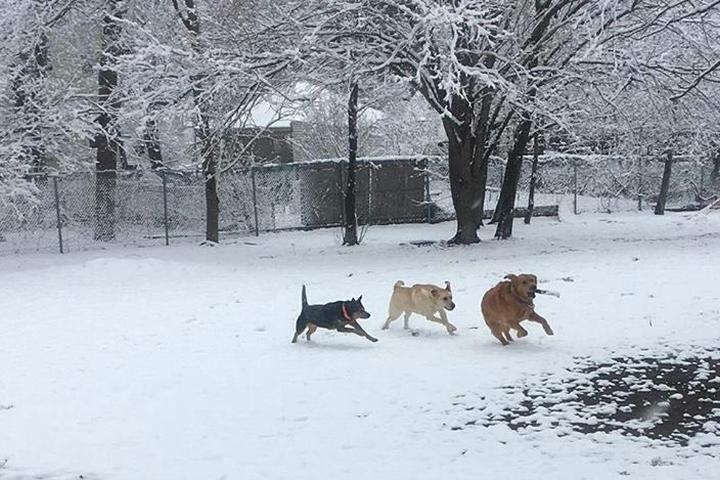 Pet Friendly Bell Street Dog Park