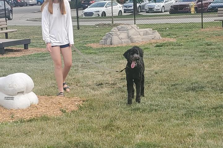 Pet Friendly Dog Park At Hamilton Town Center