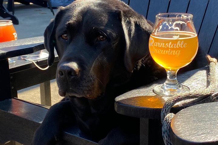 Pet Friendly Barnstable Brewing