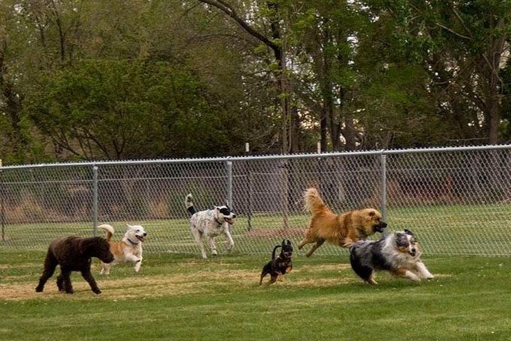 Pet Friendly Eastline Romp and Play