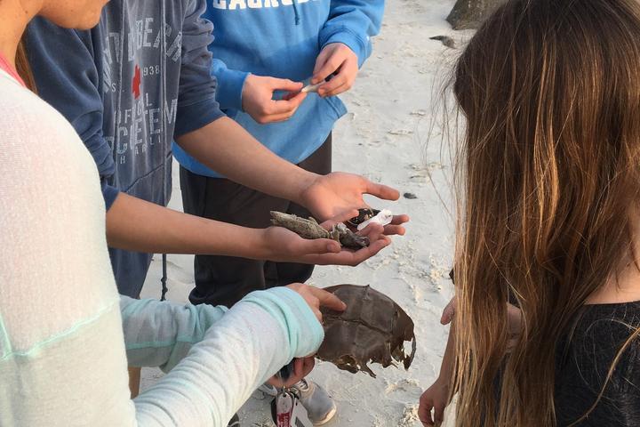 Pet Friendly Beach Walk, Turtle Talks and Shark Tales