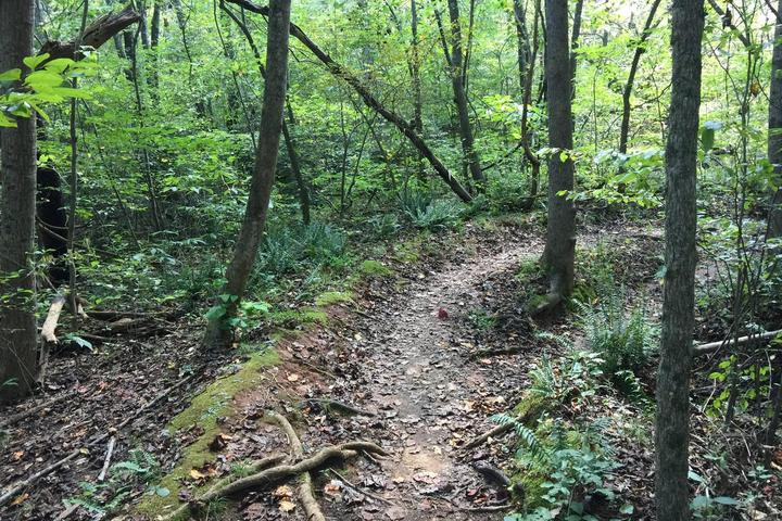 Pet Friendly Reedy Creek Nature Center and Preserve