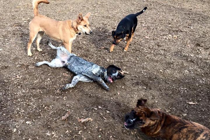 Pet Friendly Symmes Township Dog Park