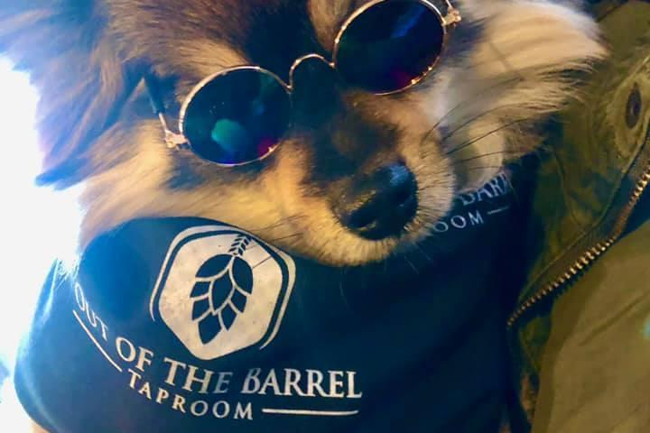 Pet Friendly Out of the Barrel