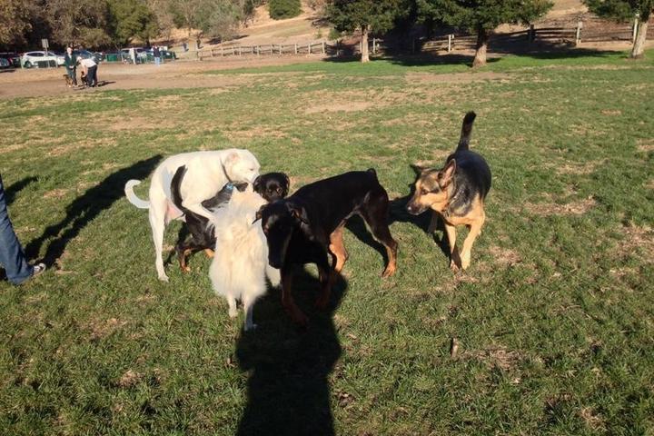 Pet Friendly Paso Nogal Park
