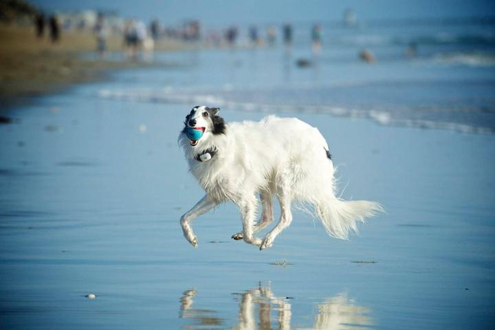 Pet Friendly Huntington Dog Beach