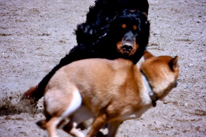 Pet Friendly Warwick City Dog Park