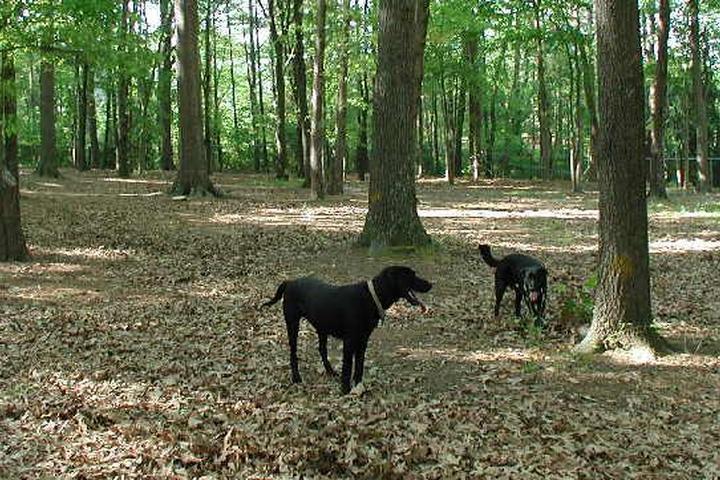 Pet Friendly Oakwood Dog Park