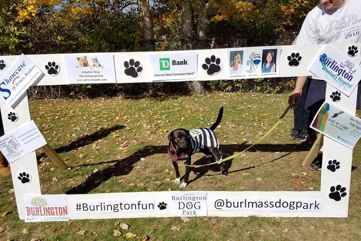 Pet Friendly Burlington Dog Park