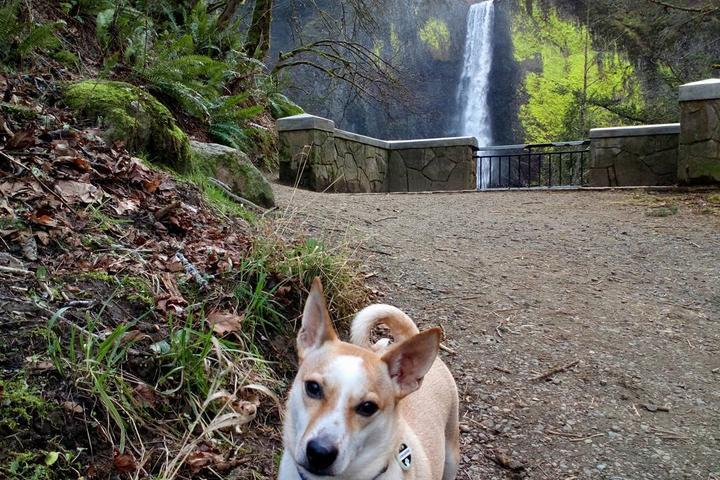 Pet Friendly Latourell Falls (Upper Trail)