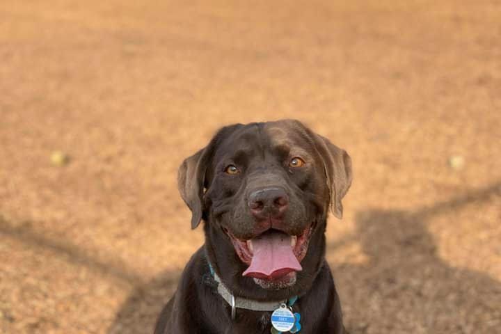 Pet Friendly Congers Dog Park