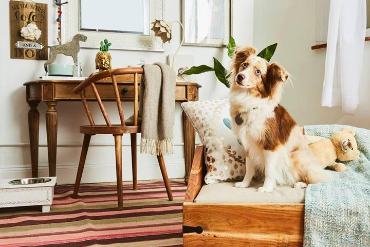 Pet Friendly T.J. Maxx & HomeGoods