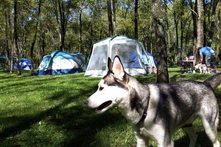 Pet Friendly Hueston Woods State Park
