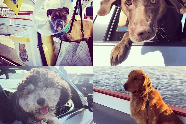 Pet Friendly Balboa Island Ferry