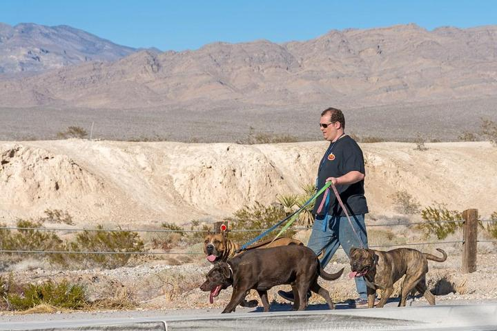 Pet Friendly Tule Springs Fossil Beds National Monument