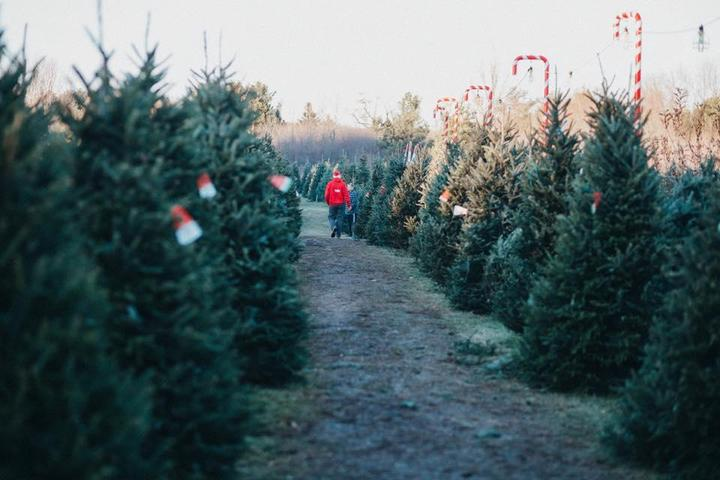 Pet Friendly Medina Christmas Tree Farm