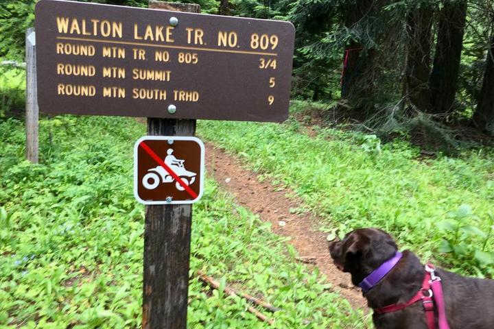 Pet Friendly Round Mountain Trail