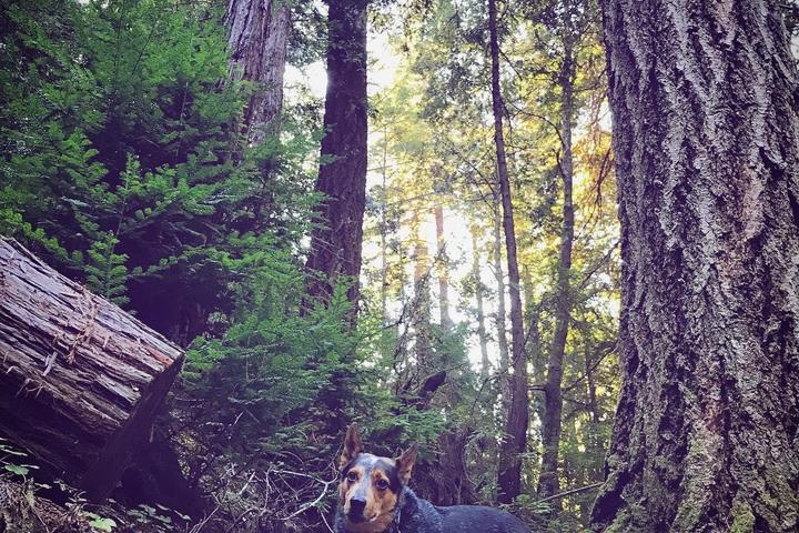 Pet Friendly Butano State Park