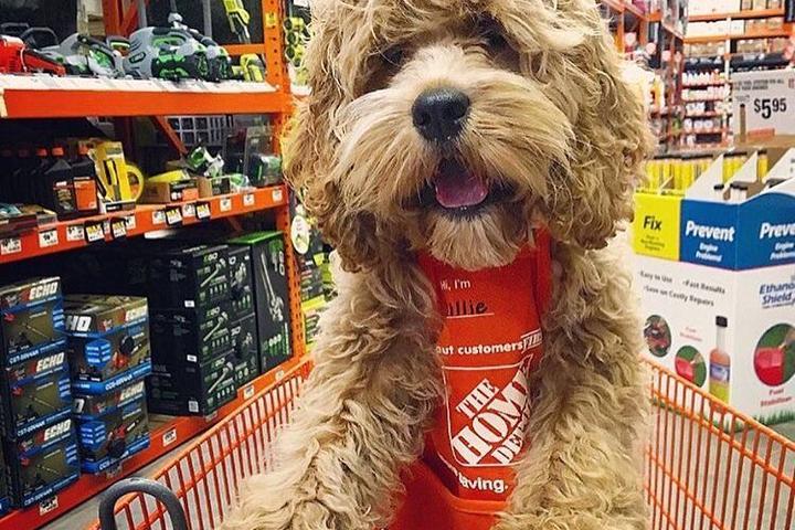 Dog Friendly Shopping In Augusta Ga Bring Fido