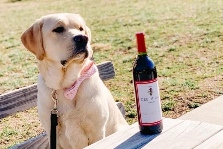 Pet Friendly Greenhill Winery & Vineyards