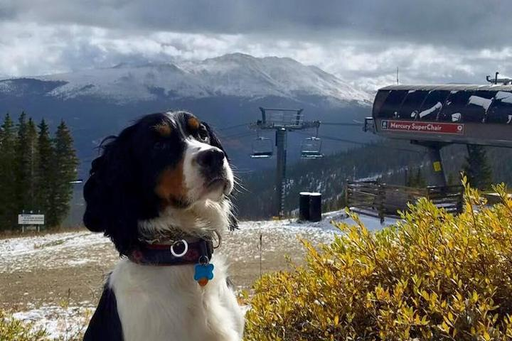 "Pet Friendly Breckenridge ""BreckConnect"" Gondola"