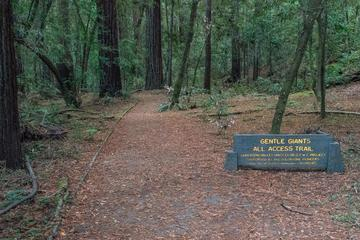 Pet Friendly Hendy Woods State Park