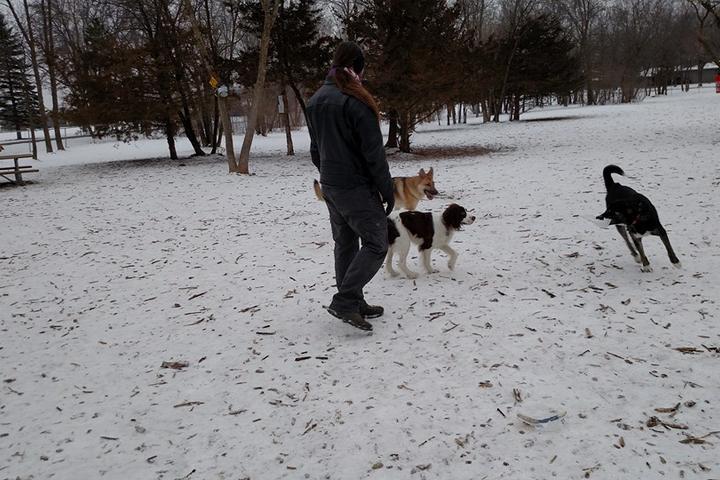 Off-Leash Dog Parks in Sauk Rapids, MN - Bring Fido