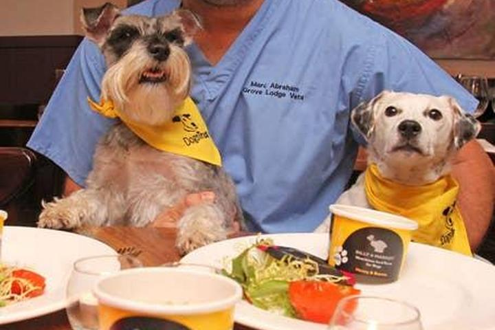 Pet Friendly Dinner with Dogs