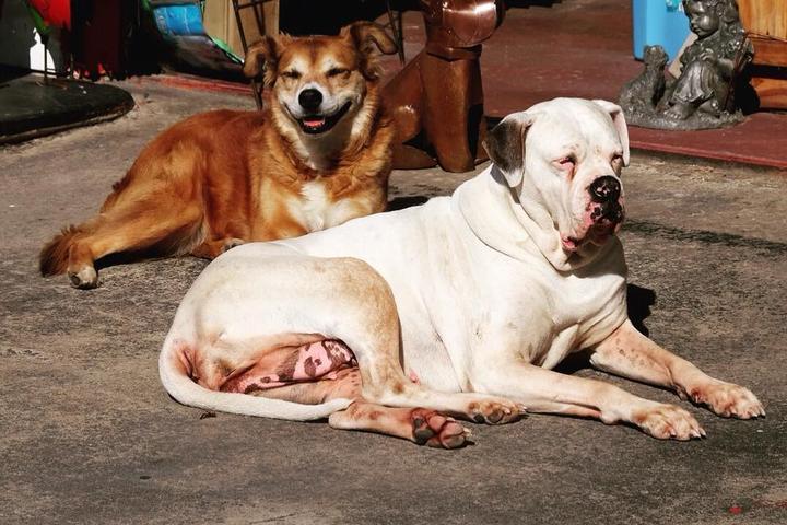 Pet Friendly Easley Flea Market